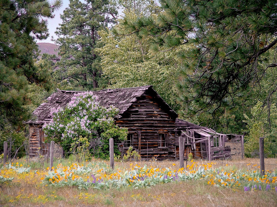 Rustic Cabin In The Mountains Photograph