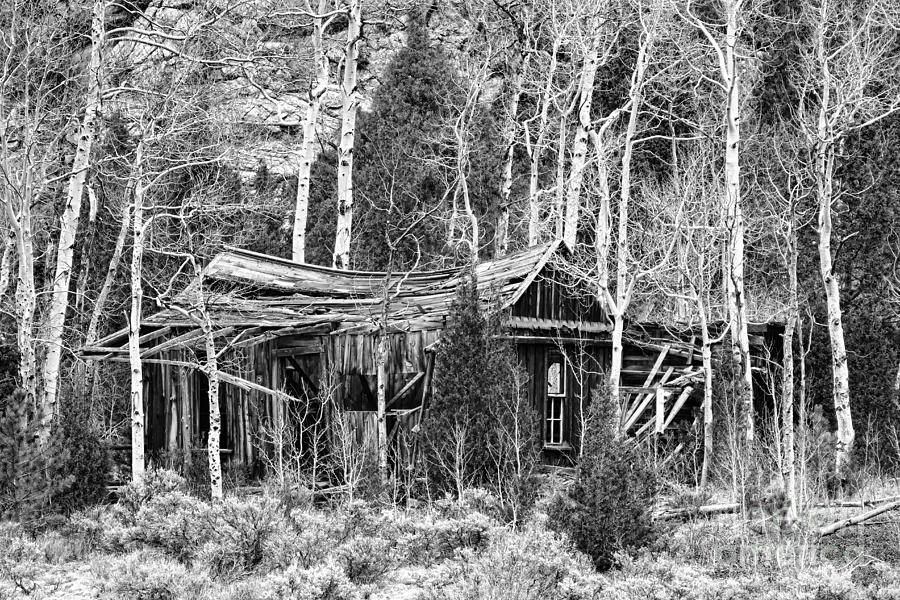 Rustic Rundown Rocky Mountain Cabin Bw Photograph By James