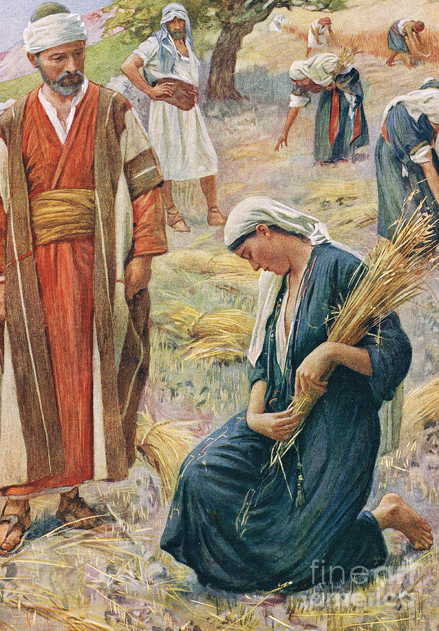 Book Of; Biblical; Boaz; Boaz's Field; Kneeling; Corn; Harvest; Harvesting; Reaping; Yield; Widow; Husband And Wife; Holy Land; Judea; Jew; Jewish; Corn Painting - Ruth by Harold Copping