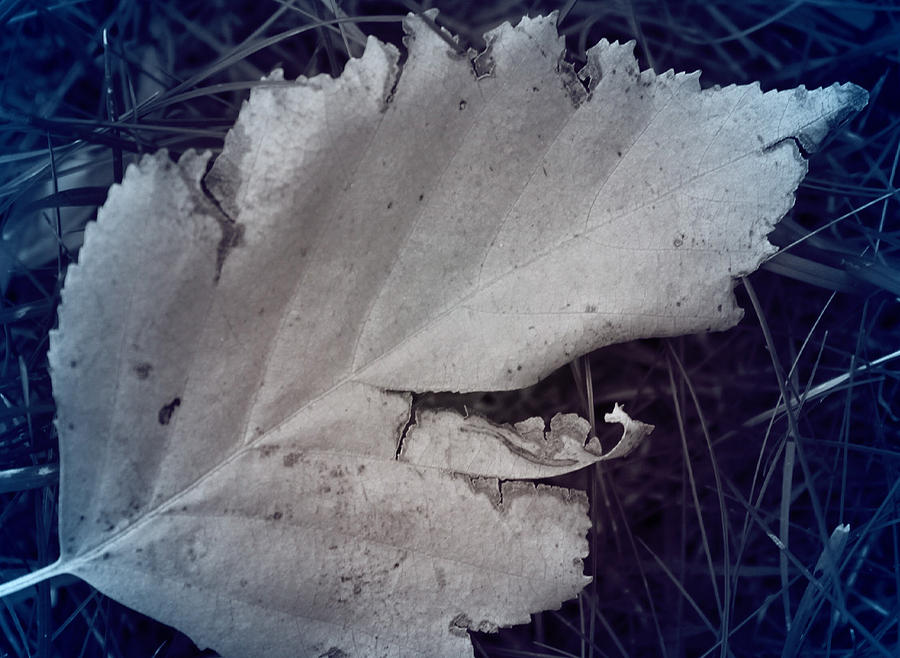 Sadness In A Leaf Photograph  - Sadness In A Leaf Fine Art Print