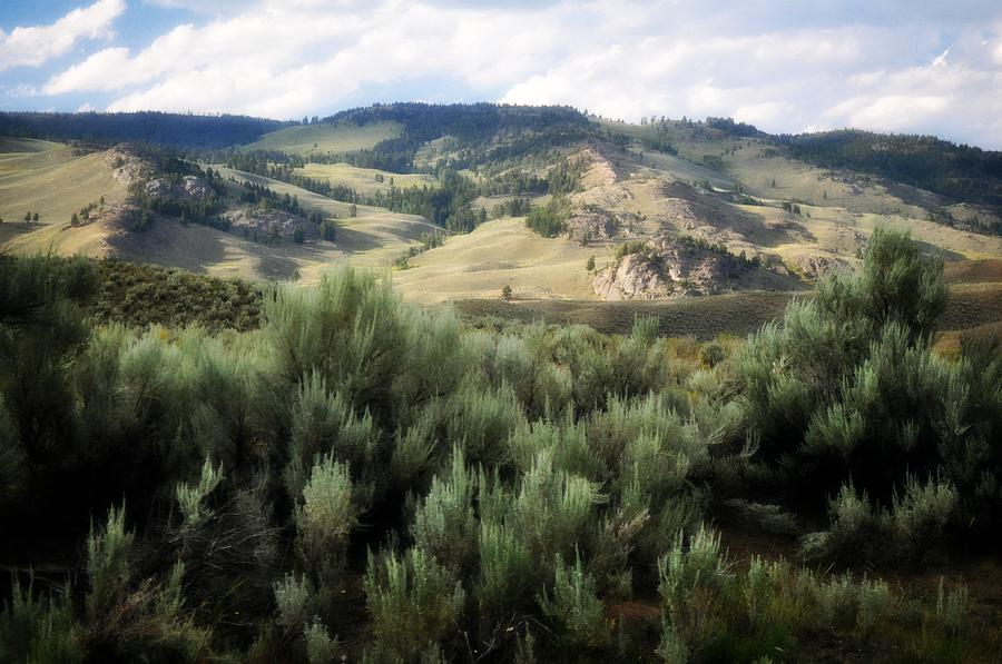 Sagebrush Photograph