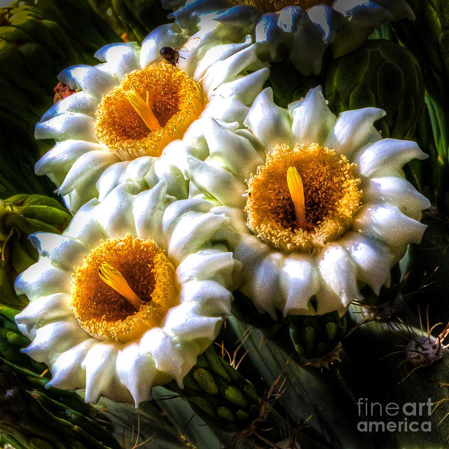 Road Runner: Saguaro Cactus Flower & Others |Saguaro Cactus Flowers