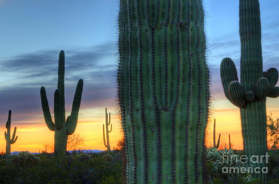 Saguaro Cactus Art Saguaro cactus sunrise arizona