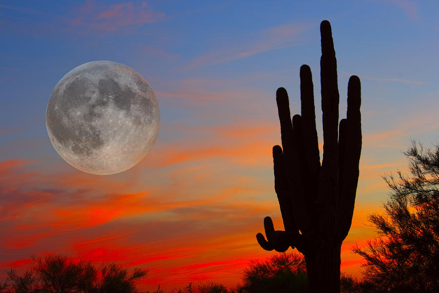 Saguaro Full Moon Sunset Photograph