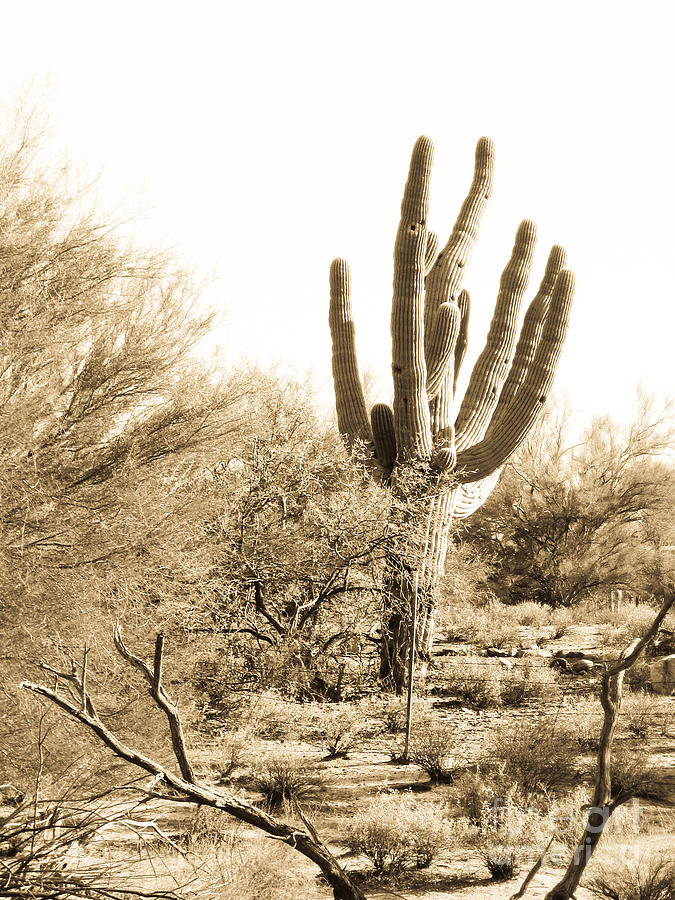 Saguaro Photograph