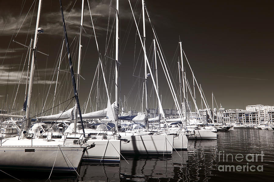 Sailboats Docked Photograph  - Sailboats Docked Fine Art Print