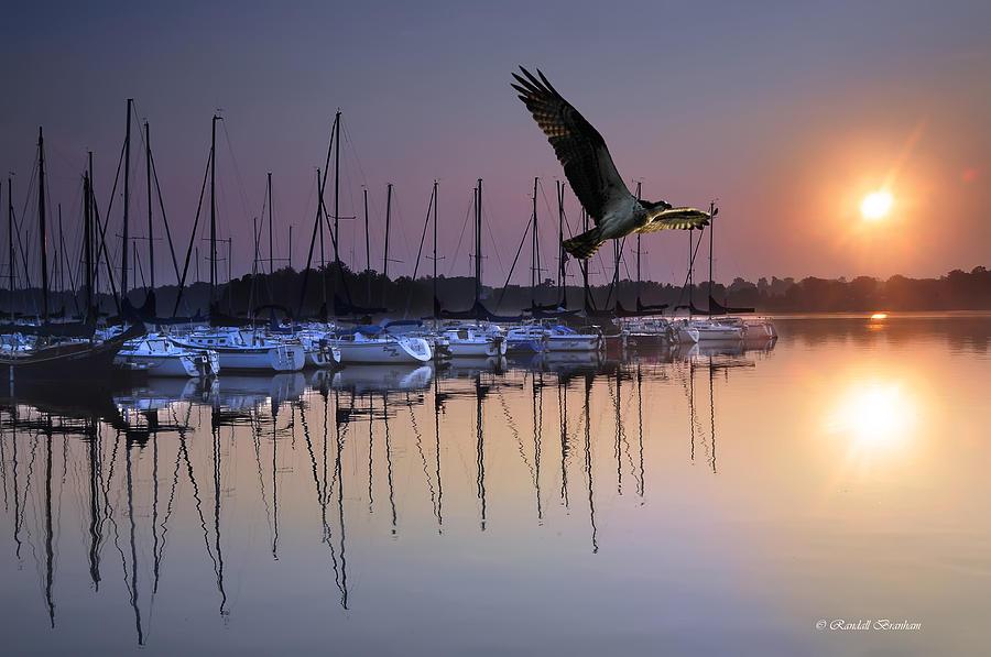 Sailboats Osprey Sunrise Photograph