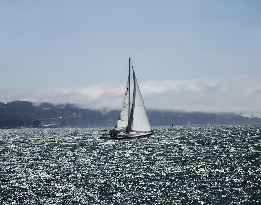 Sailing The Sf Bay Photograph