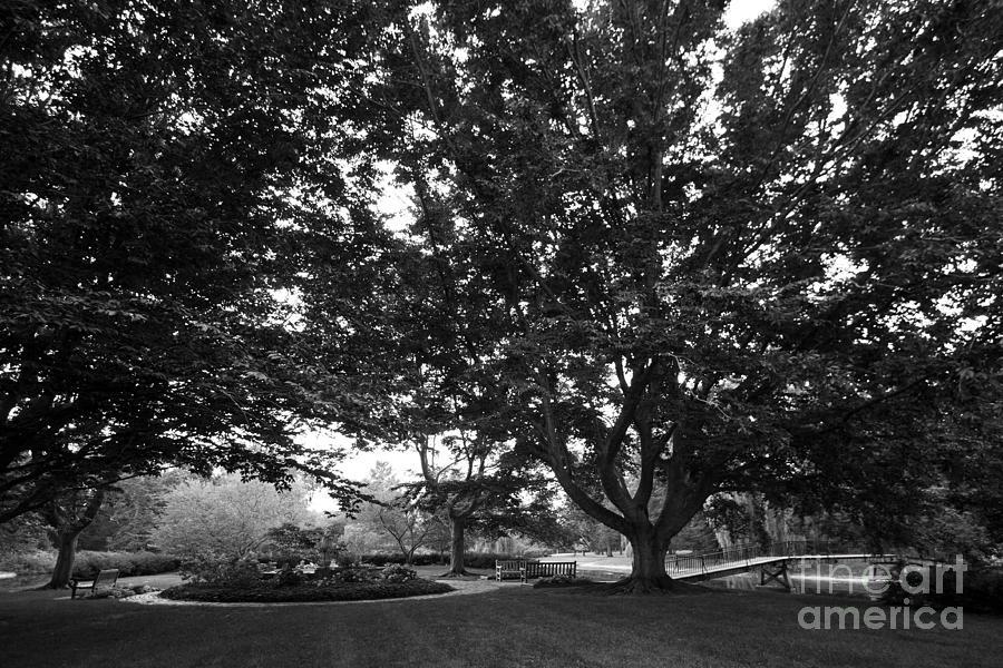 Saint Marys College Landscape Photograph