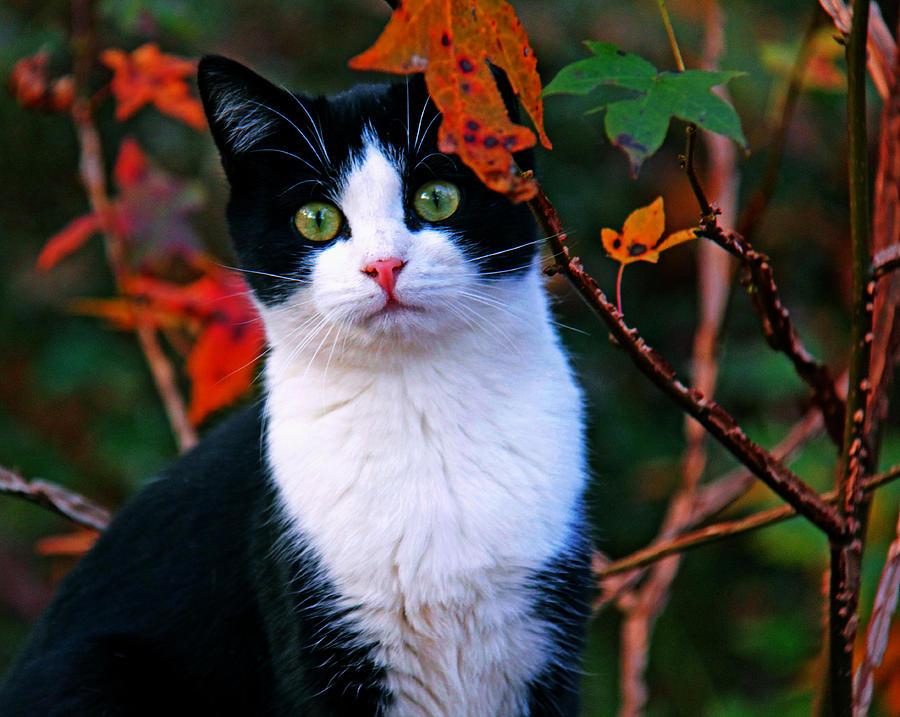 Salem Photograph - Salem by Andy Lawless