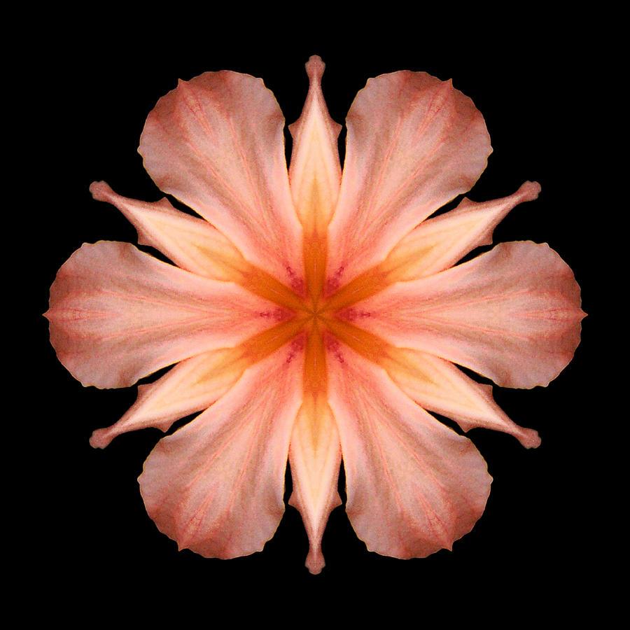 Salmon Daylily I Flower Mandala Photograph