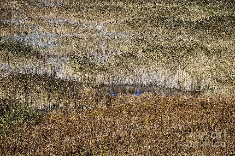 Salt Marsh  Photograph  - Salt Marsh  Fine Art Print