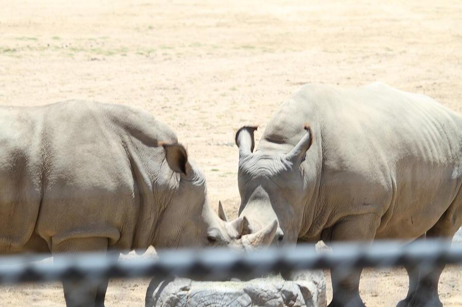 San Diego Zoo - 1212289 Photograph