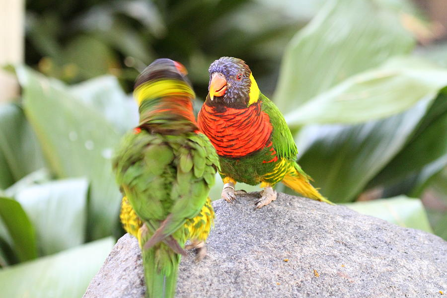 San Photograph - San Diego Zoo - 1212341 by DC Photographer
