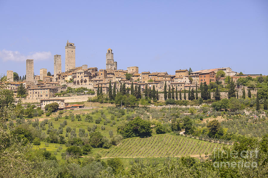San Gimignano With Vineyards Photograph