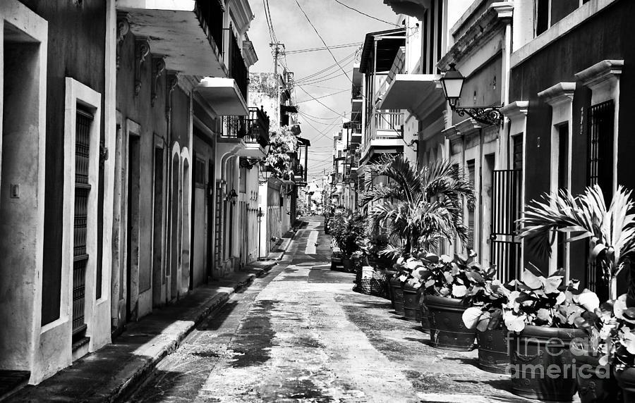 San Juan Street Plants Photograph