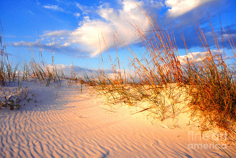Sand Dune And Sea Oats At Sunset Photograph