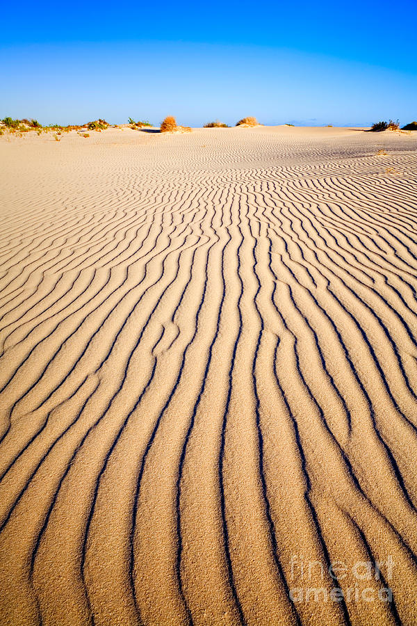 Sand Photograph - Sand Dunes At Eucla by Colin and Linda McKie