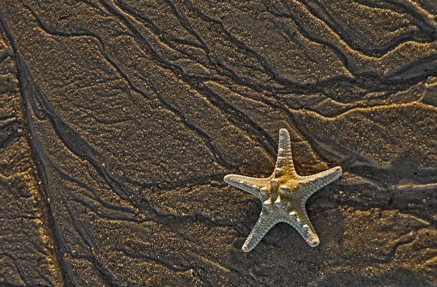 Sand Prints And Starfish  Photograph  - Sand Prints And Starfish  Fine Art Print