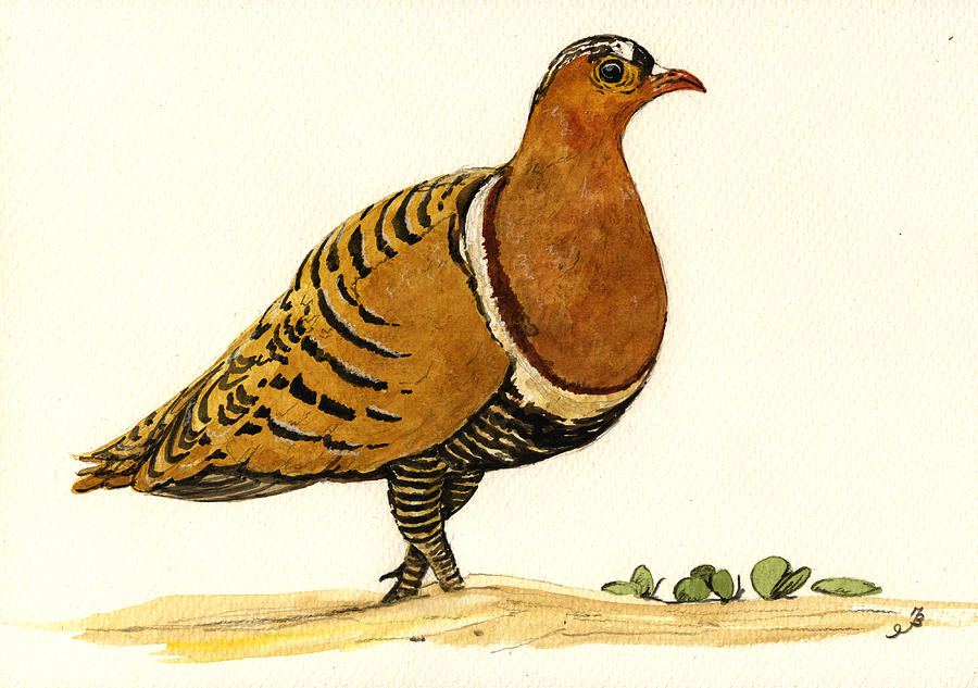 Sandgrouse Painting