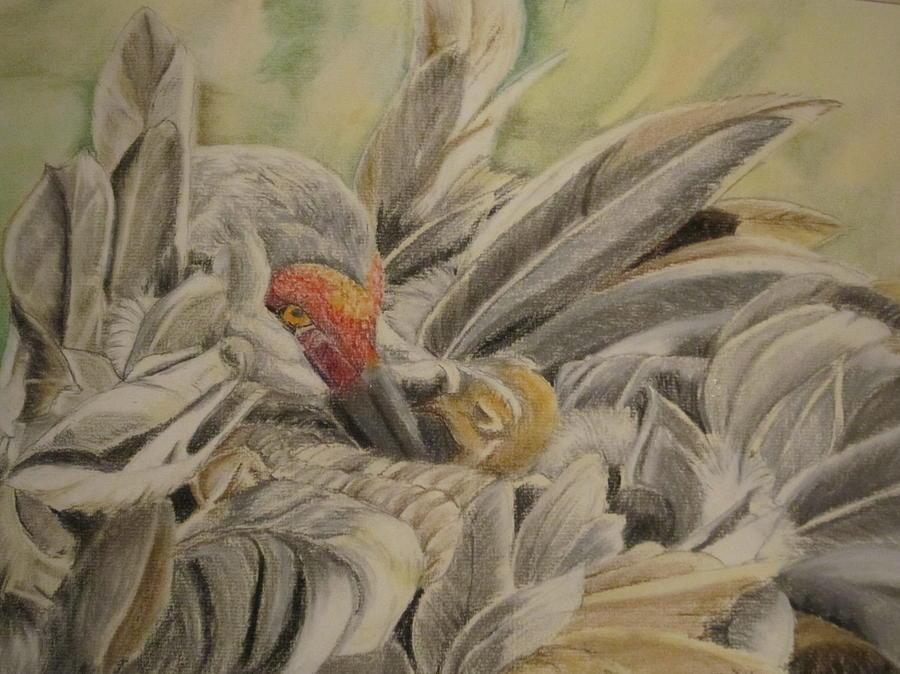 Sandhill Crane And Chick Painting