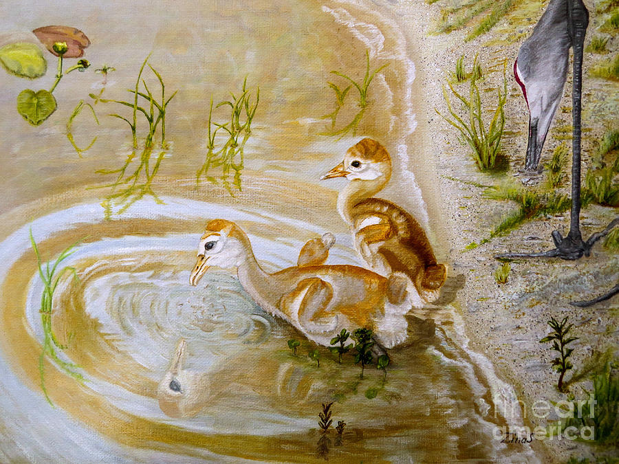 Sandhill Cranes Chicks First Bath Painting