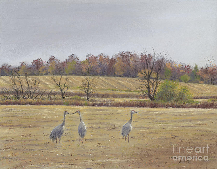 Sandhill Cranes Feeding In Field  Painting