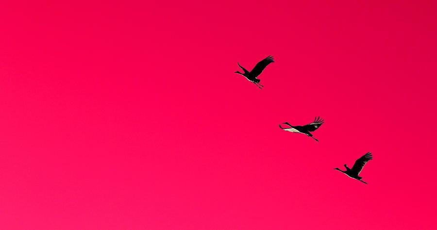 Sandhill Silhouette Photograph