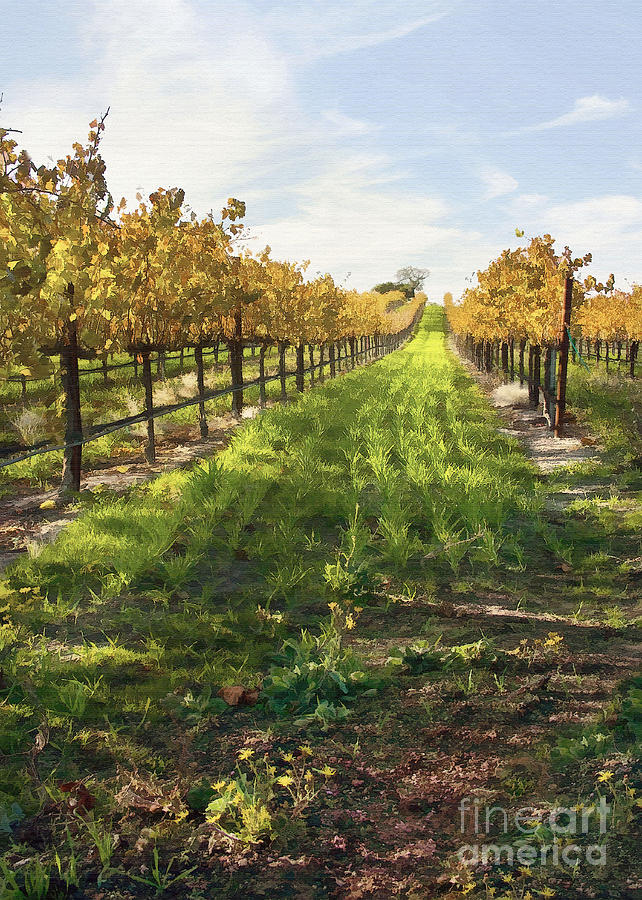 Santa Maria Vineyard Digital Art  - Santa Maria Vineyard Fine Art Print