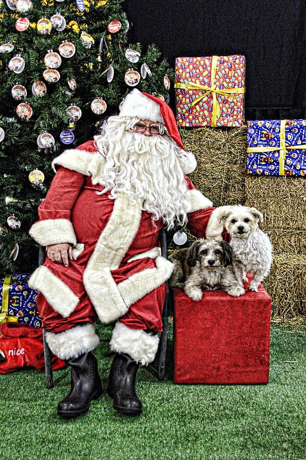 Santa Paws  Photograph