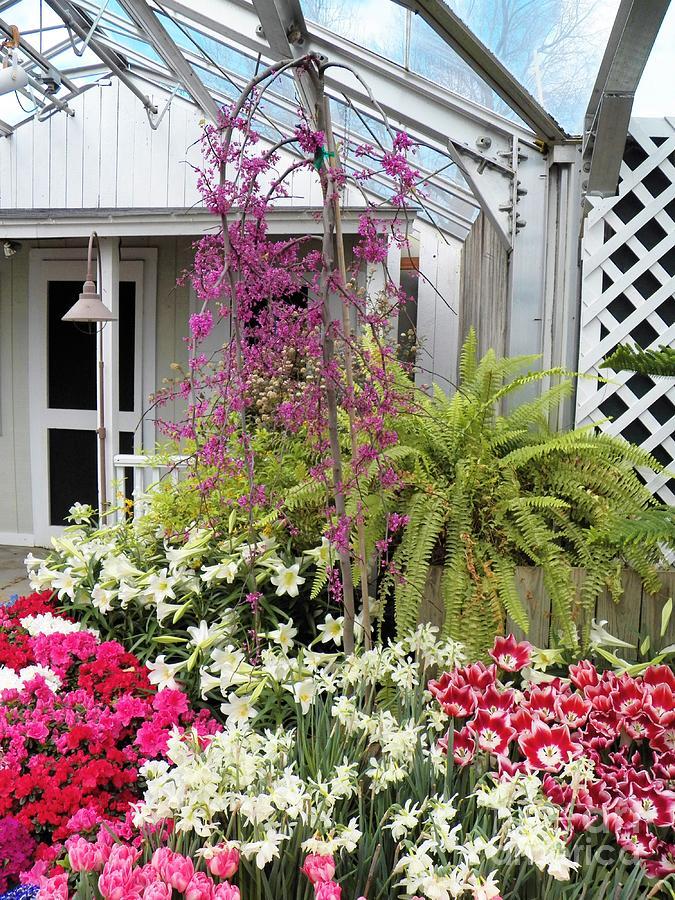 Santuary Garden Photograph