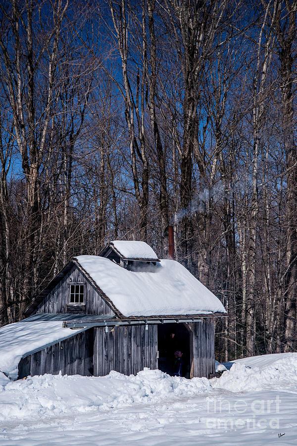 Sap Photograph - Sap House II by Alana Ranney