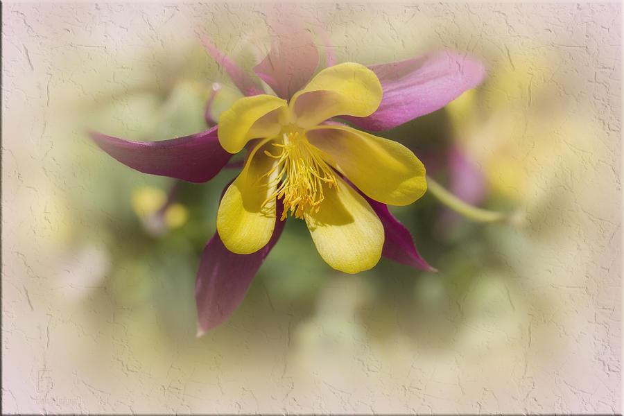 Flowers Photograph - Sarah by Elaine Teague