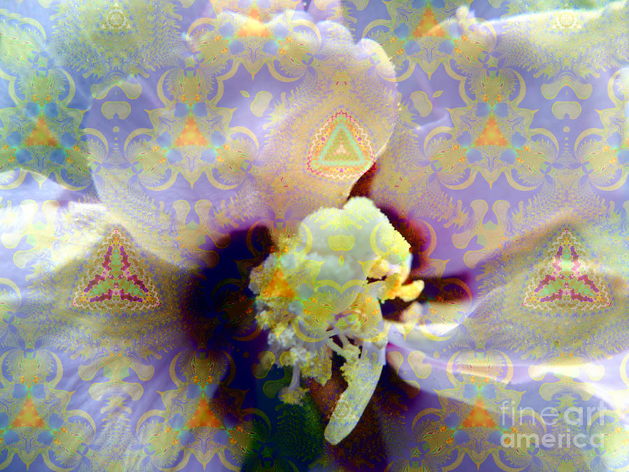 Satin Flower Fractal Kaleidoscope Photograph