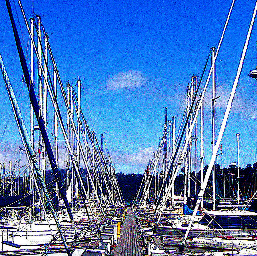 Sausalito Sailboats Photograph