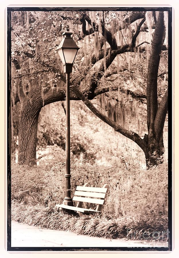 Savannah Bench Sepia Photograph  - Savannah Bench Sepia Fine Art Print