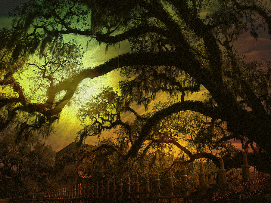 Savannah Ga Spanish Moss-featured In Best Blank Greeting Cards And Harmony And Happiness Groups Photograph  - Savannah Ga Spanish Moss-featured In Best Blank Greeting Cards And Harmony And Happiness Groups Fine Art Print