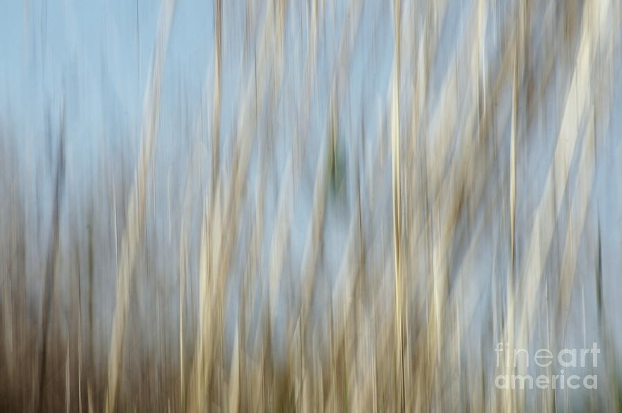 Sawgrass In Motion Photograph