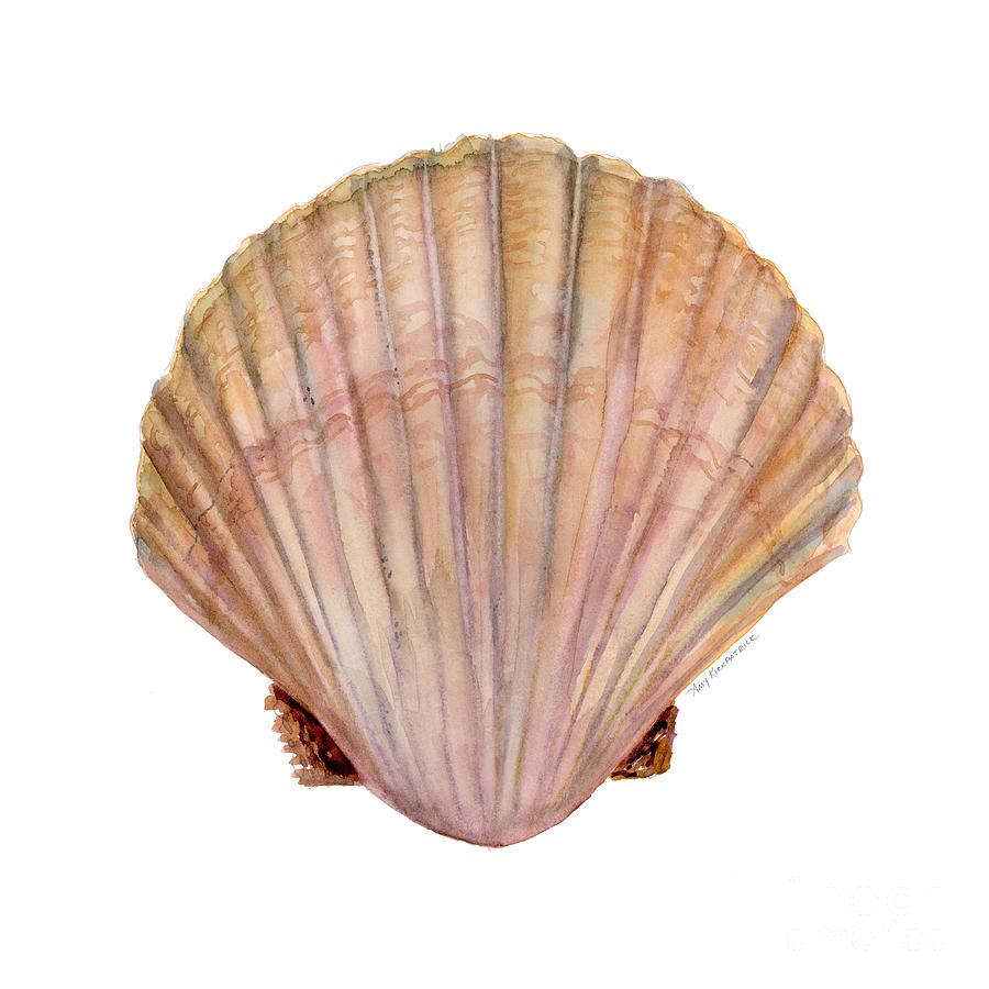 Scallop Shell by Amy Kirkpatrick