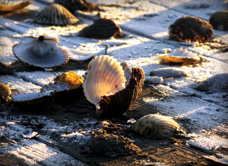Half Shell On Ice Photograph