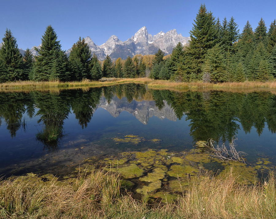Schwabacher Landing Morning Photograph  - Schwabacher Landing Morning Fine Art Print