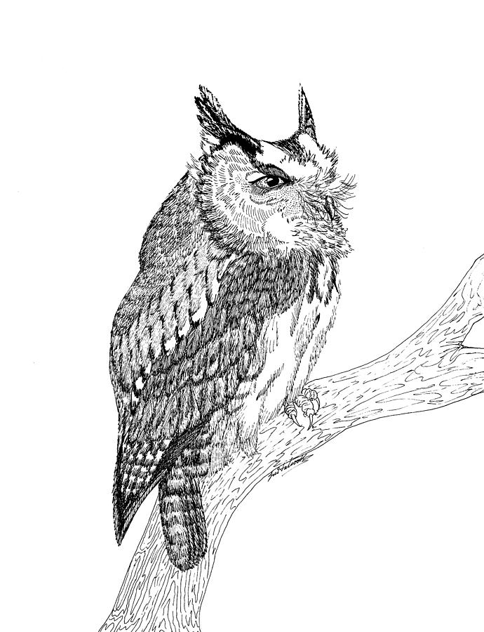 Screech Owl Drawing