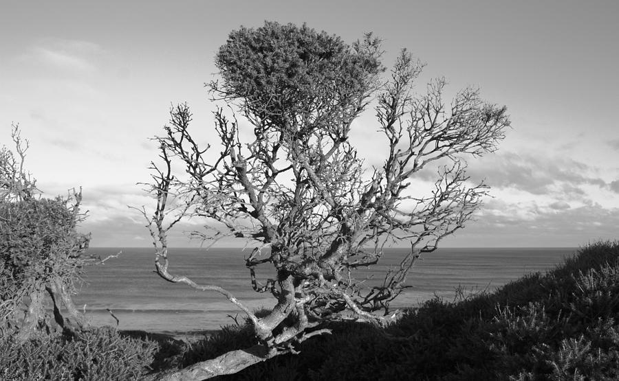 Sea Cliff Tree Photograph