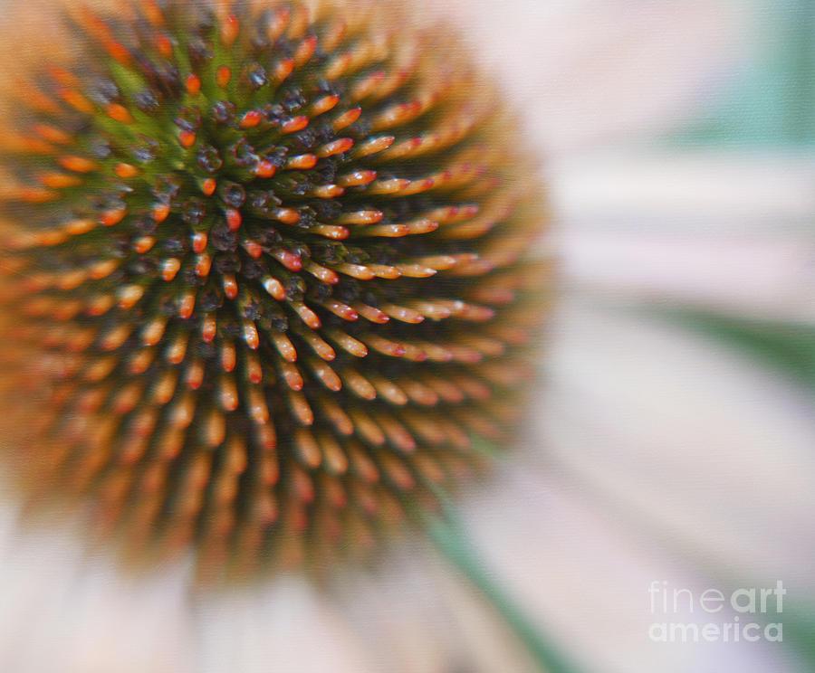 Fine Art Floral Macro Photograph - Sea Hedgehog by Irina Wardas
