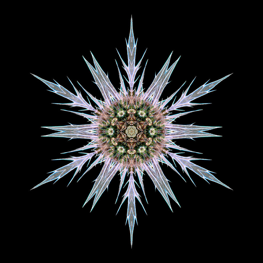 Sea Holly I Flower Mandala Photograph