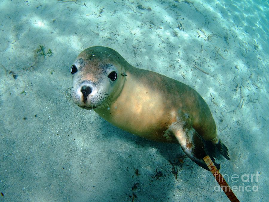 Sea Lion On The Seafloor Photograph