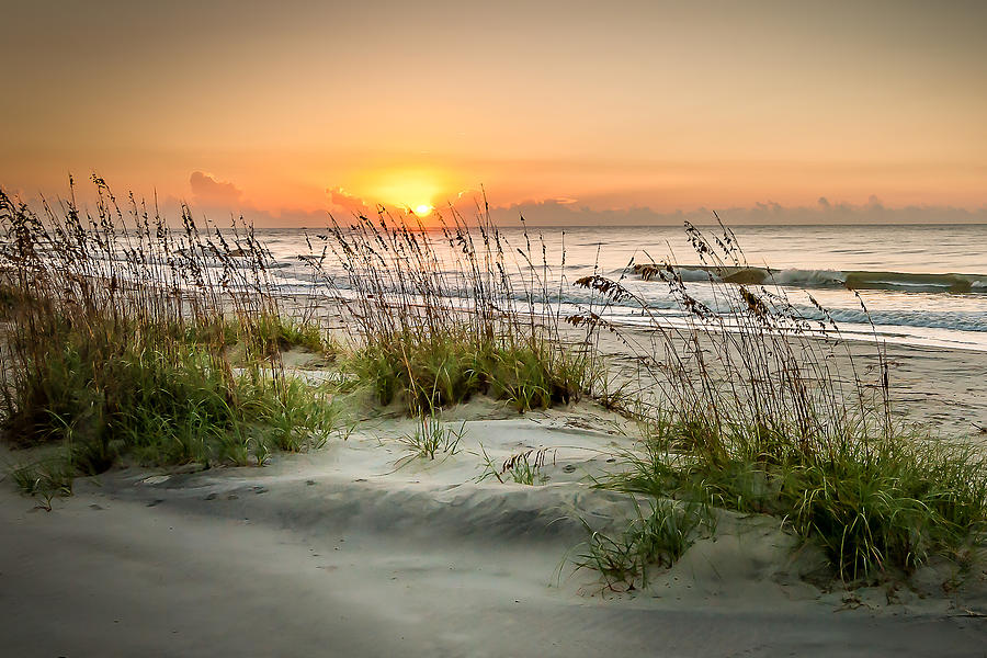 Beach Digital Art - Sea Oat Islands by Steve DuPree
