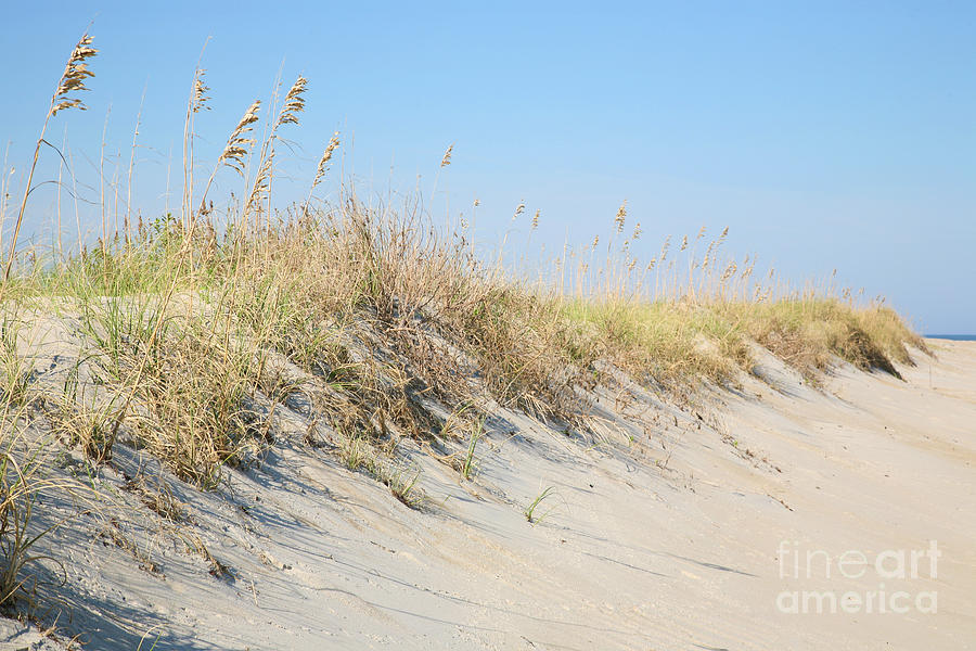 Sea Oat Serenity Photograph  - Sea Oat Serenity Fine Art Print