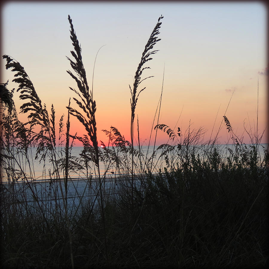 Sea Oats At Sunset Photograph  - Sea Oats At Sunset Fine Art Print