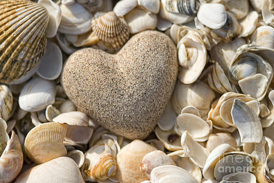 sea shell Heart Photograph  - sea shell Heart Fine Art Print